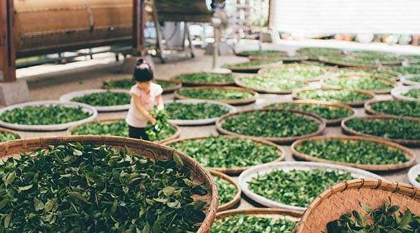 Oryginalne zioła na nowotwory